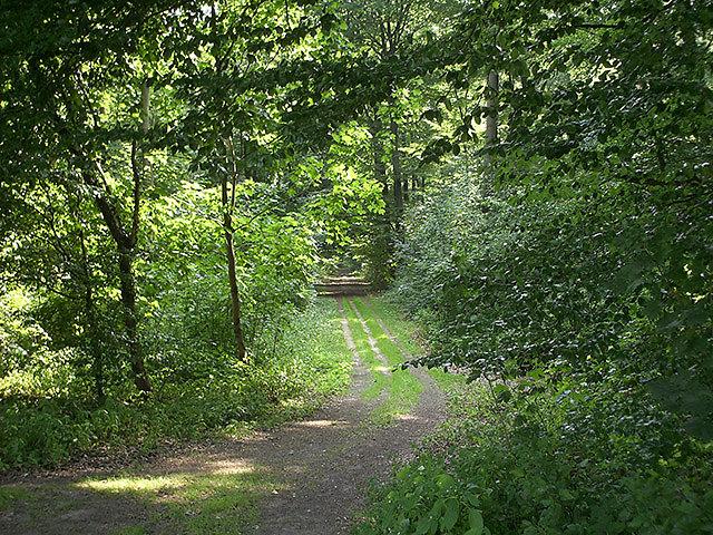 Wald.jpg
